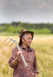 Old man in barley field Stock Photography
