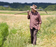 Old man in barley field Stock Images