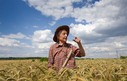 Old man in barley field Royalty Free Stock Images