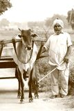 An old man with beard and turban with a bullock cart in punjab village. stock photos