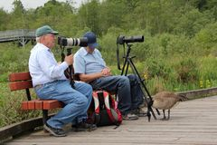 Elderly Men and Canada Goose Royalty Free Stock Photo
