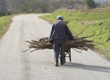Old Man Carrying Firewood. An old man carrying firewood in a wheelbarrow Royalty Free Stock Photography
