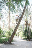 Old man climbing on palm tree in Tozeur oasis Stock Photography