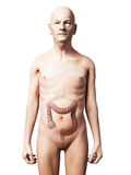 Old man - colon Stock Photography
