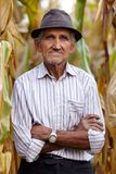 Old man at corn harvest Stock Photography