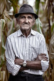 Old man at corn harvest Royalty Free Stock Image