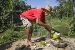 Old man cutting a cocnut. Bali, Indonesia, September 8th, 2016: Indonesian man is cutting a coconut Stock Images