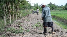 Old man and daughter together help planting tree and growing vegetable at garden. PHATTHALUNG, THAILAND - JULY 14 : Old man and daughter together help planting stock video footage