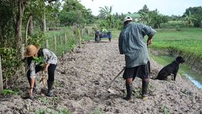 Old man and daughter together help planting tree and growing vegetable at garden. PHATTHALUNG, THAILAND - JULY 14 : Old man and daughter together help planting stock footage