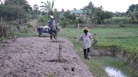 Old man and daughter together help planting tree and growing vegetable at garden. PHATTHALUNG, THAILAND - JULY 14 : Old man and daughter together help planting stock video