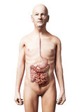 Old man - digestive system Royalty Free Stock Image