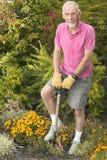 Old man digging in garden Stock Image