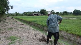 Old man digging soil at ground for planting tree and growing vegetable at garden. PHATTHALUNG, THAILAND - JULY 14 : Old man digging soil at ground for planting stock footage
