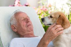 Old man with dog in garden stock images