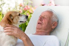Old man with dog in garden royalty free stock photography