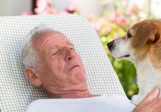 Old man with dog in garden stock image