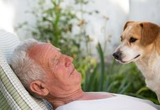 Old man with dog in garden stock photos