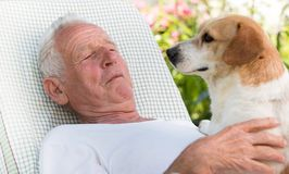 Old man with dog in garden royalty free stock image