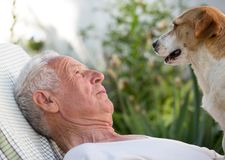 Old man with dog in garden royalty free stock photo
