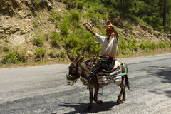 The old man on a donkey. Stock Image