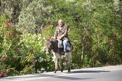 Old Man on Donkey Stock Photo