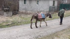 Old man with the donkey