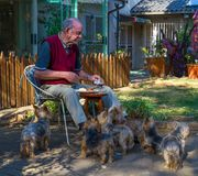 Old man eating lunch outside royalty free stock images