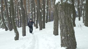 Old man exercises to improve his health by cross country skiing. In forest between pine trees stock video footage