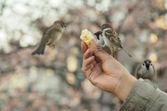 AN OLD MAN FEED THE BIRDS Stock Images
