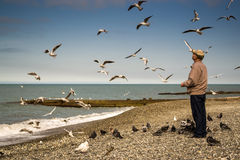 Old Man Feeding the Birds Stock Image