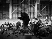 Old man feeding birds in Paris. Black and white photo of man feeding birds Royalty Free Stock Photos