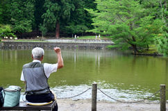 Old man feeding fancy carp or Koi fish in pond in the garden of Stock Photos