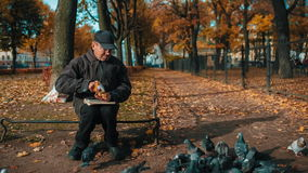 Old Man Feeding Pigeon In Park stock video footage