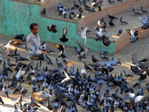 Old man feeding pigeons in bandra Royalty Free Stock Images
