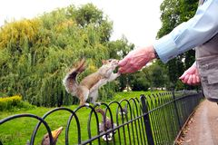 Old man feeding a squirrel Stock Photography