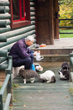 Old man feeding the stray cats in the park Stock Photo