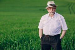 Old man in field. An elderly man walks on the field Stock Images