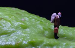 Old man figure walking on fruit skin. Senior traveler figurine on rough exotic vegetable. Senior man healthy diet concept. Active lifestyle in elderly age Royalty Free Stock Images