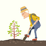Old man gardener plant a tree Stock Image