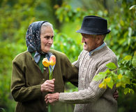 Old man giving flowers to his wife Stock Images