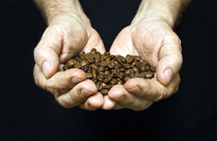 Old man hands holding coffee beans Stock Photography