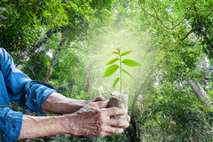 Old man hands holding green young plant. Royalty Free Stock Images
