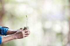 Old man hands holding  green  young plant  ,with clipping path. Old man hands holding  green  young plant  ,with clipping path Stock Photography