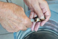 Old man hands opening fresh mussel shell with a knife Stock Image