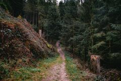 Old man hiking in the beautiful Schwarzwald forest stock photography