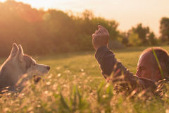 Old man with his dog in a field at sunset Stock Images
