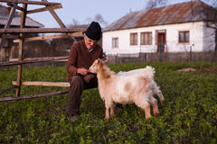 Old man with his goats Royalty Free Stock Photography