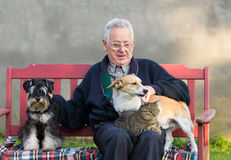 Old man with his pets. Senior man with dogs and cat on his lap on bench Stock Images