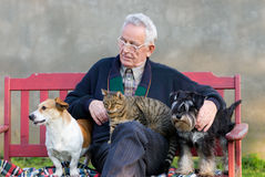 Old man with his pets. Senior man with dogs and cat on his lap on bench Stock Photos