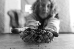 Old man holding a dainty white flower in rich soil Royalty Free Stock Photo
